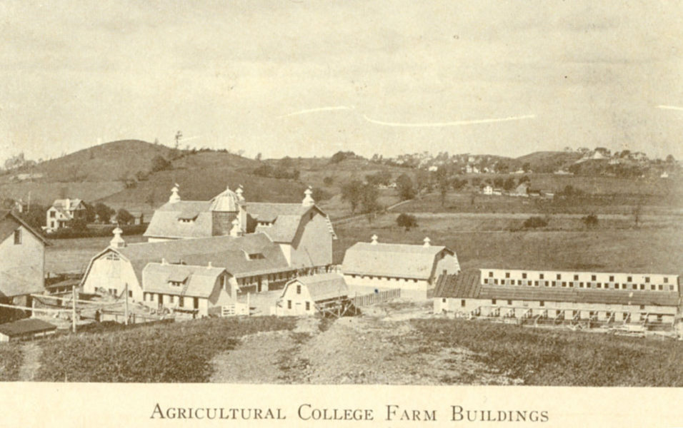 "Buildings on the University Farm with fields in the background. Photo captioned as ""Agricultural College Farm Buildings"""