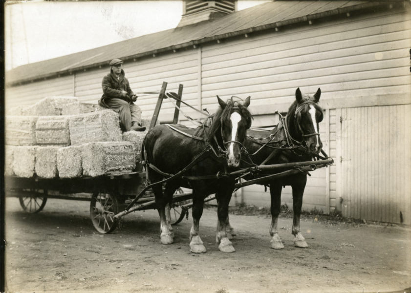Two horses pulling a wagon of hay bales with the driver sitting on top of the hay bales