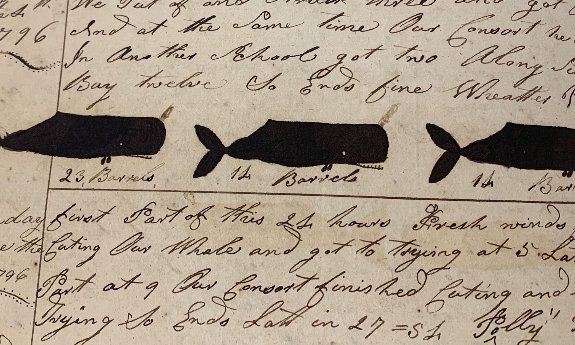 whale banner