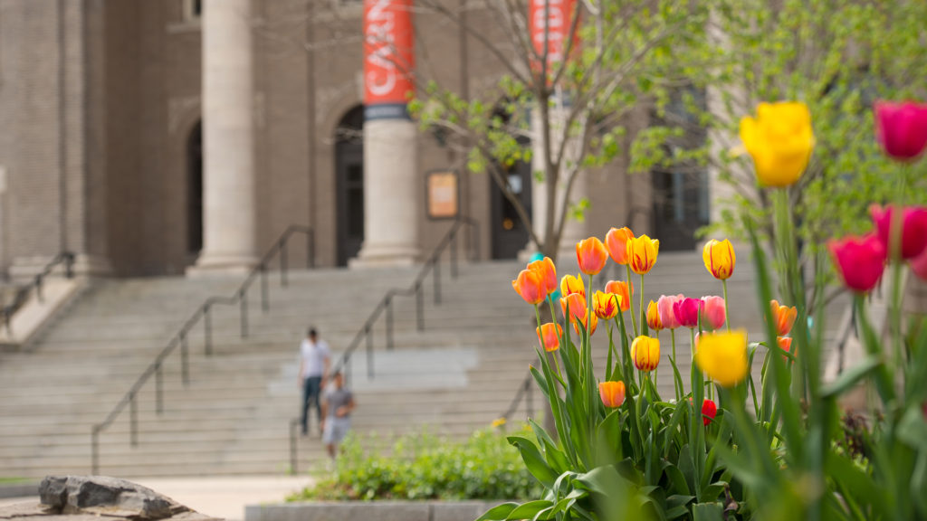 Springtime orange, yellow, and pink tulips near Carnegie Library